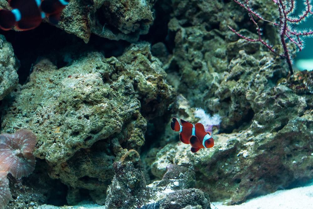 rybka w oceanarium
